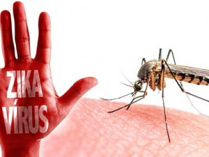Internationale forskere mobiliserer imod Zika-virus
