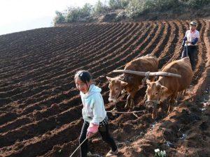 Kina lancerer stor opgradering af landbrugsjordens produktivitet