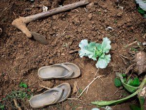 Verden står over for den værste fødevarekrise, advarer FAO