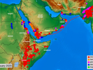Østafrika trues af græshoppeangreb